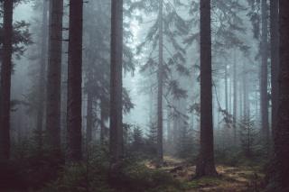 Фото: pixabay.com | «Убивает своих жертв ядом»: новое опасное создание появилось в Приморье