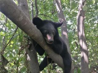Фото: скриншот siberiantiger_center   Приморский центр реабилитации вернул в дикую природу медвежат