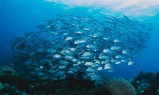 Фото: freepik.com   В воды Приморья зашла одна из крупнейших рыб мира
