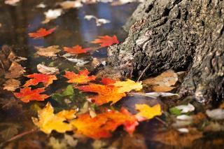 Фото: pixabay.com   Опубликован неутешительный прогноз погоды на октябрь
