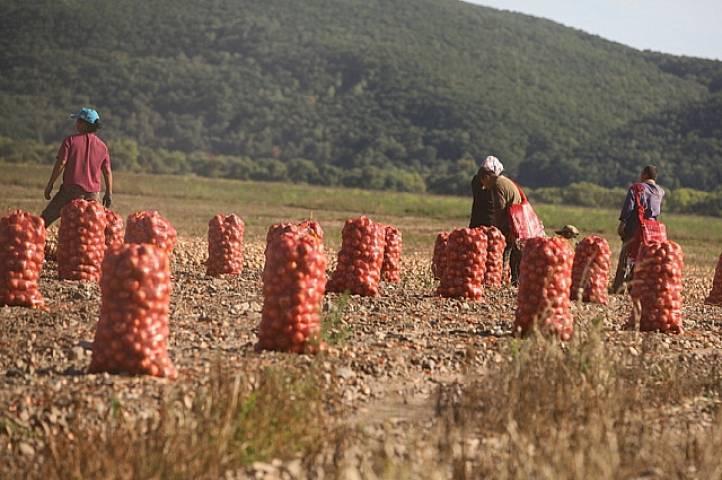 ВПриморье подсчитали предварительный вред сельхозугодьям