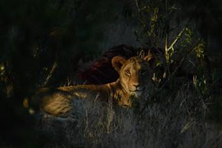 Фото: pixabay.com | «Невероятная красота»: приморцам показали уникальные кадры из известного сафари-парка