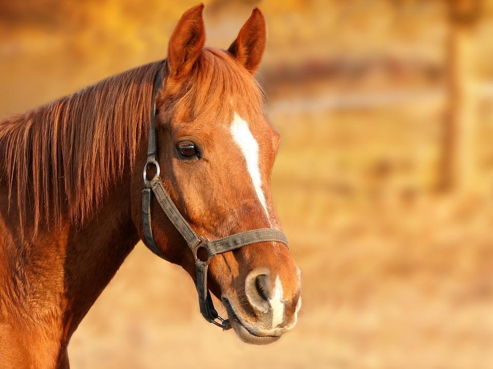В Приморье водитель Toyota Land Cruiser Prado сбил лошадь