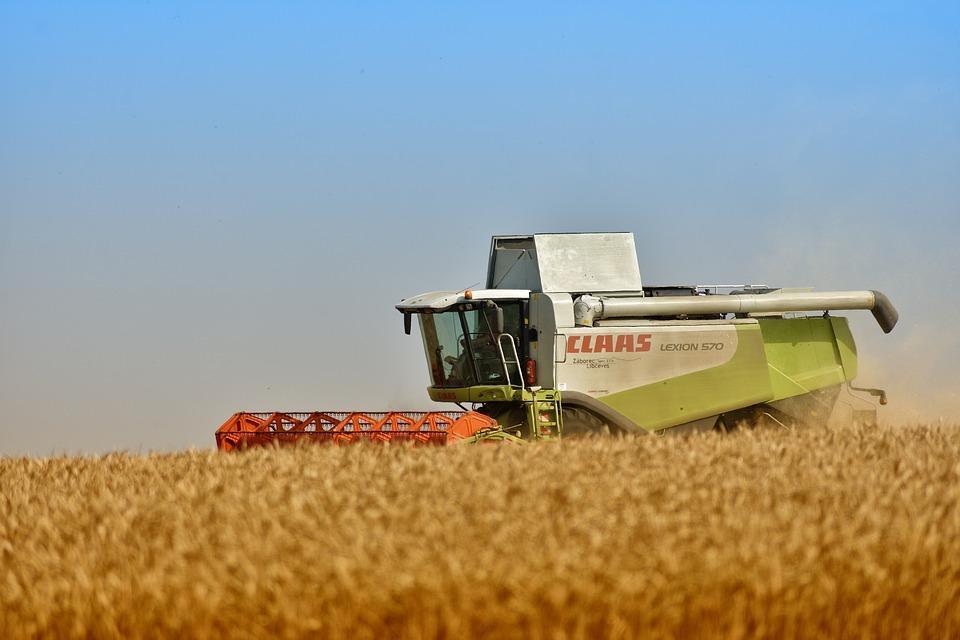 В Приморье собрали первые 20 гектаров кукурузы