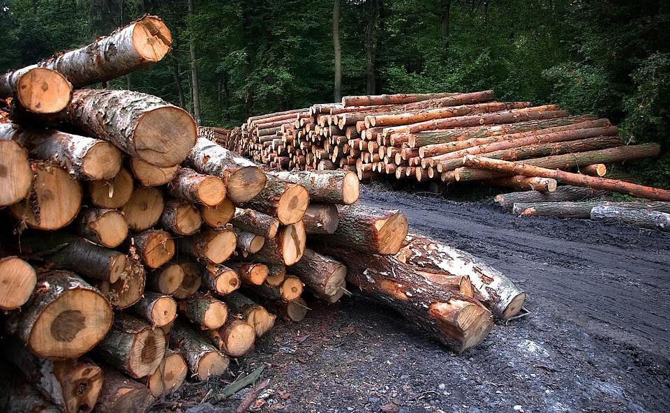 В Приморье «черный лесоруб» нарубил леса на крупную сумму