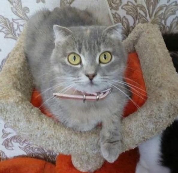 В Приморье после гибели волонтеров более 40 кошек остались без попечения