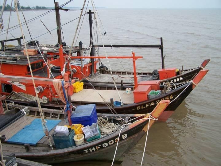 Иностранца оштрафовали за незаконный вылов кальмара в Приморье