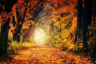 Фото: pixabay.com   «Стоит бешеных денег»: люди пошли гулять в лес и нашли это в Приморье