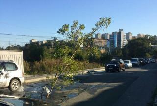 Во Владивостоке посреди дороги  «выросло» дерево
