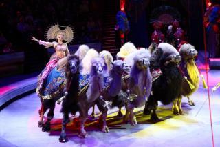 Фото: «Песчаная Сказка» | Только до 17 октября.Заключительные представления шоу Гии Эрадзе  «Песчаная сказка» во Владивостокском цирке