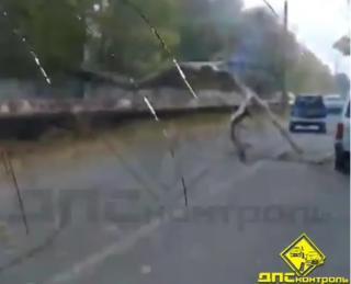 Дерево перекрыло проезжую часть в пригороде Владивостока