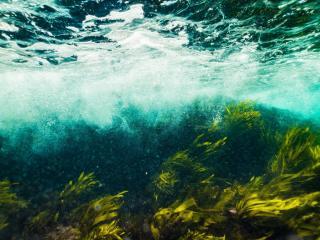 Фото: pixabay.ru | Ученые нашли на побережье Приморья опасные водоросли