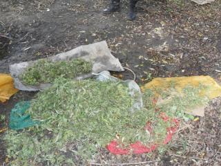 Более 80 килограммов «веселящей» травы изъято в Михайловском районе Приморья