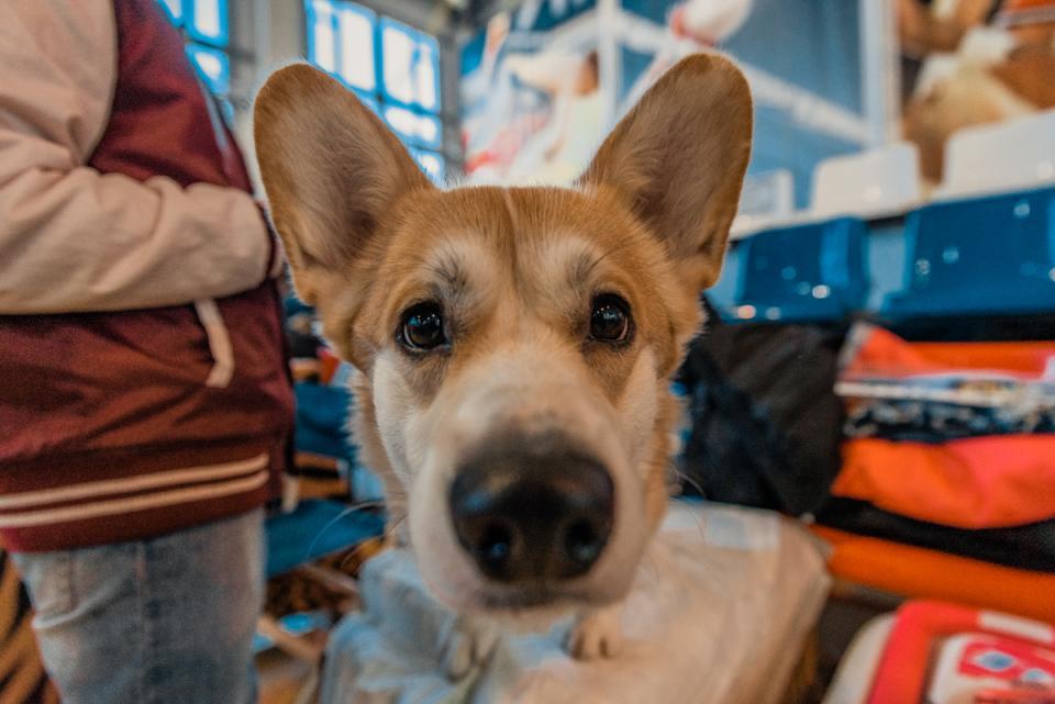 Интернациональная выставка собак прошла во Владивостоке