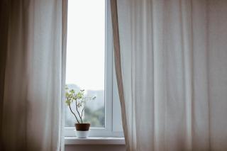 Фото: pixabay.com   Видео, снятое мужчиной из окна дома, возмутило жителей Владивостока