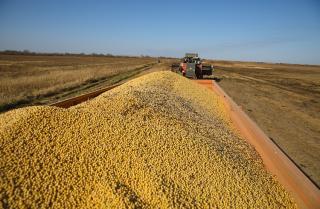 Фото: primorsky.ru   Названы лидеры по сбору урожая сои в Приморье