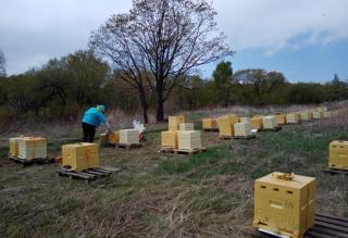 Фото: Минсельхоз Приморья   Приморские пчеловоды соберут около пяти тысяч тонн меда