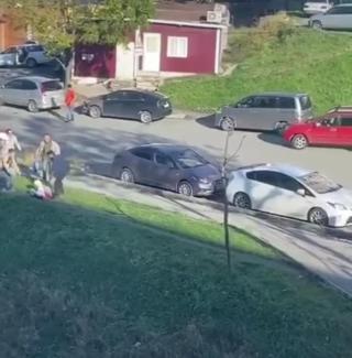 Фото: @dps.control   «Чуть не загрызли»: сразу несколько собак набросились на детей во Владивостоке