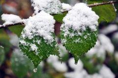 Фото: Примпогода | В Приморье выпал первый снег