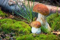 Во Владивостоке маленькая девочка отравилась грибами