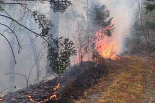 В Приморье потушено более 130 гектаров леса