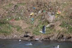 Фото: Татьяна Меель | Если бы жители Владивостока не мусорили, в городе было бы больше скверов – мэрия
