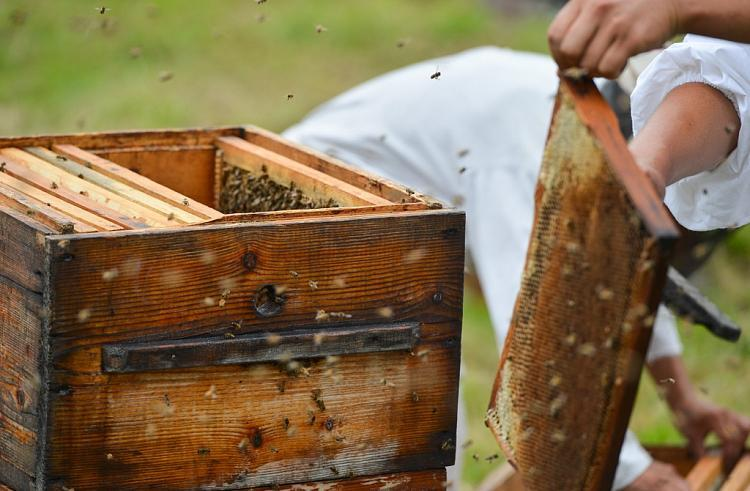 Пчеловодство: дело для души