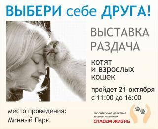 Выставка-раздача котят и кошек пройдет во Владивостоке в эту субботу