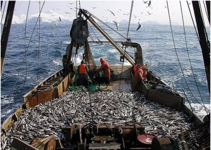 Приморские рыбаки выловили почти 10 тысяч тонн иваси