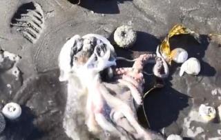 Фото: YouTube | Названа основная версия загрязнения акватории Камчатки