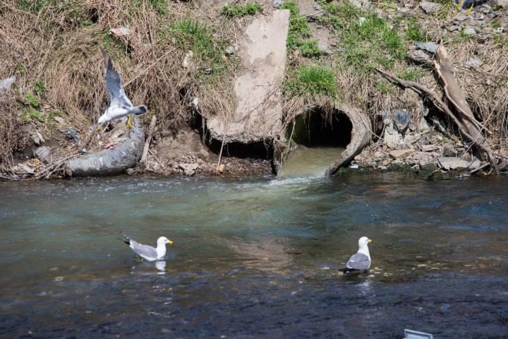 Вовладивостокскую Вторую реку попал мазут из-за трагедии накотельной