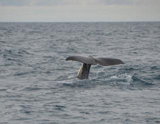 В акваторию Амурского залива заплыл кит