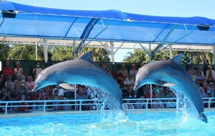 ВПриморском океанариуме погибли два дельфина, третий находится при смерти