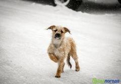Фото: Примпогода   До следующего циклона в Приморье будет морозно