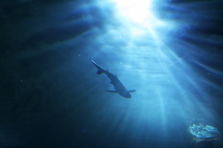 На Тихоокеанском флоте водолазы успешно погрузились на рекордную глубину