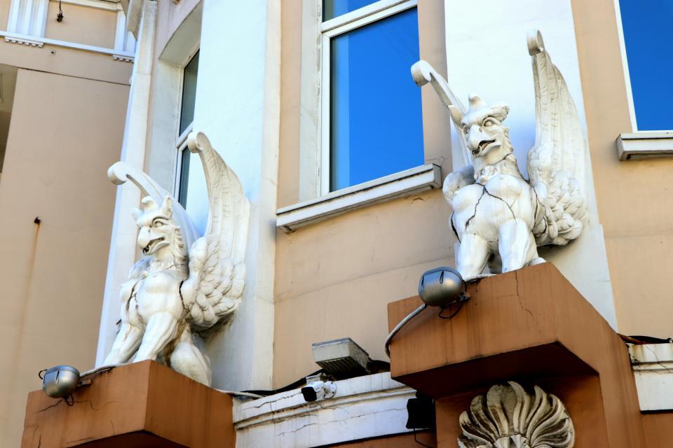 Общественность Владивостока требует спасти грифонов