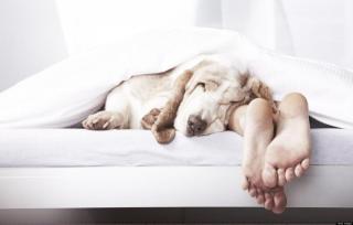 Фото: pixabay   Специалисты рассказали правила здорового сна