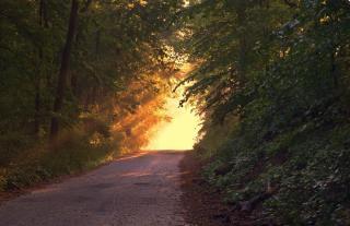 Фото: pixabay.com | «Несколько раз пересмотрела»: видео из леса в Приморье набирает популярность