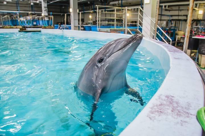 Дельфинов вПриморском океанариуме отравили преднамеренно