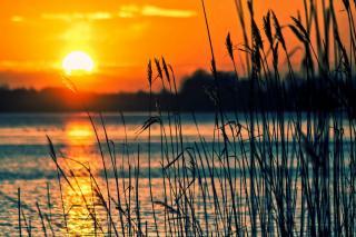 Фото: pixabay.com | «Кого там убили?»: снимки «опасного» места в Приморье набирают популярность