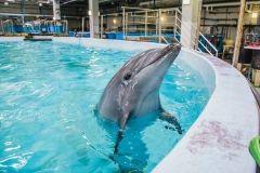 Фото: Анастасия Есауленко   В Следственном комитете подтвердили информацию о возбуждении уголовного дела по факту гибели дельфинов