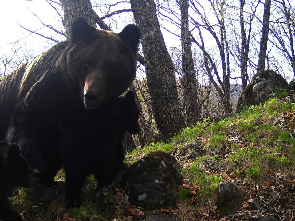 В Приморье любопытные фотомодели изучали устройство камер для «лесных селфи»