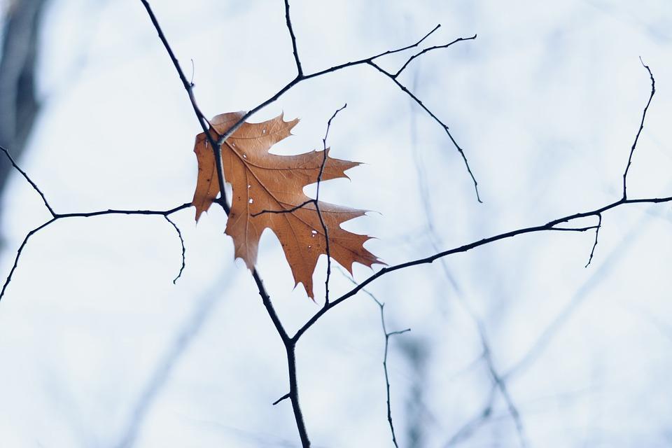 Синоптики Приморья: потепления в выходные не ждать