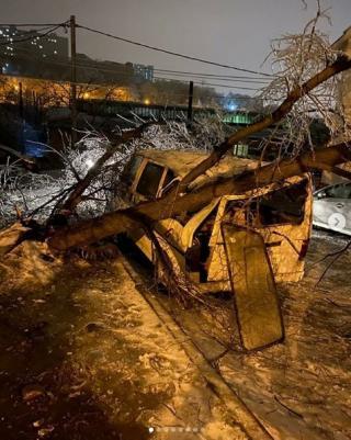 Фото: скриншот dps.control   Непогода «наломала дров» во Владивостоке