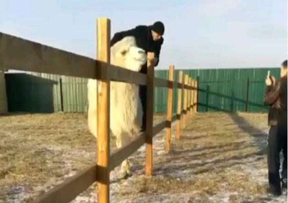 Полиция установила личности мужчин, устроивших «беспредел» в зоопарке в Приморье