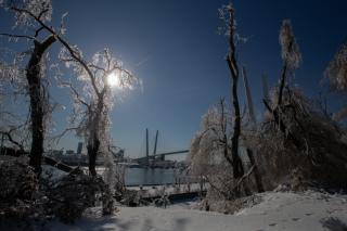 Фото: Татьяна Меель / PRIMPRESS   «Хрустальный город»: ледяной дождь преобразил Владивосток до неузнаваемости