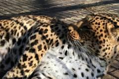 Фото: Зоопарк «Садгород» | Животные зоопарка «Садгород» открыли сезон «зимнего обжорства»