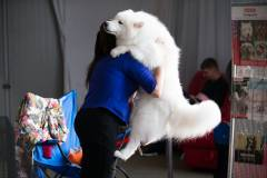 Фото: Татьяна Меель   Во Владивостоке выбрали «Пса Очарование-2016»