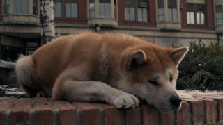 История собаки Хатико в Ханкайском районе потрясла Приморье