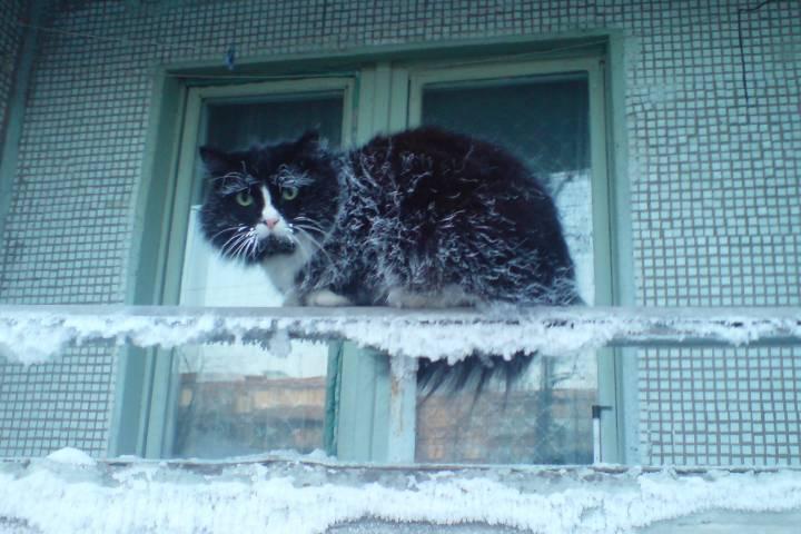 Очередной снежный циклон нагрянет воВладивосток кконцу рабочей недели
